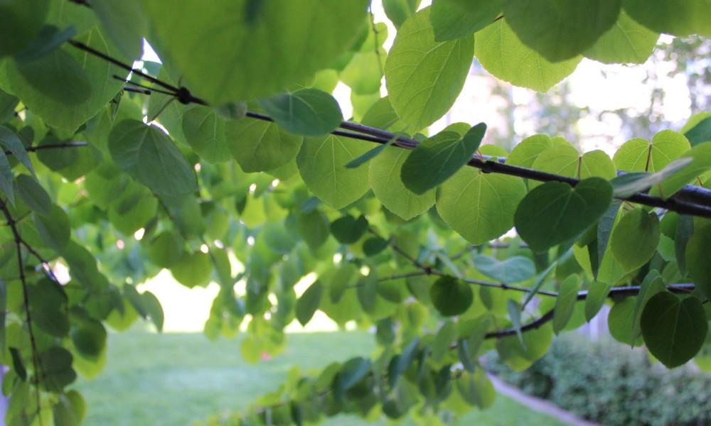 Tilstandsrapport trær i Meyerhagen